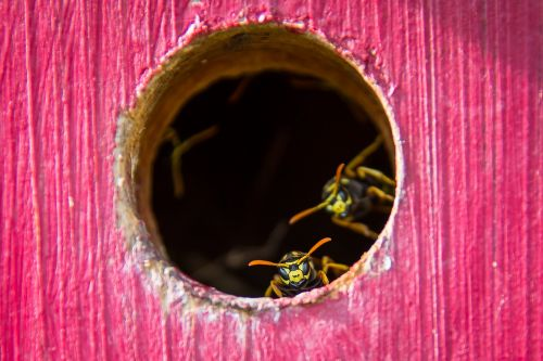 wasp the hive insect