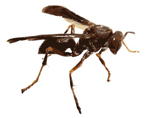 wasp close wings