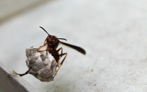 wasp nest insect