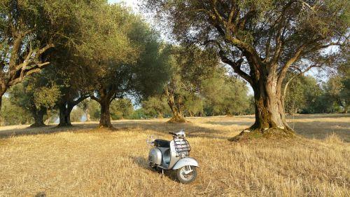 wasp moto motorcycle
