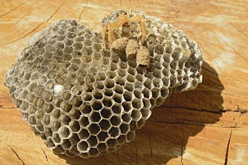 wasp nest vacuum spider