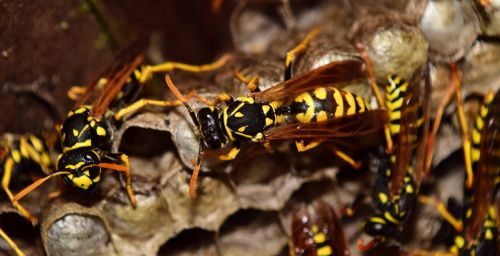 wasps the hive combs
