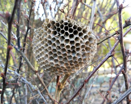 wasps wasps' nest nest