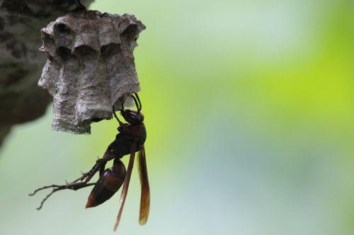 wasps bee honey