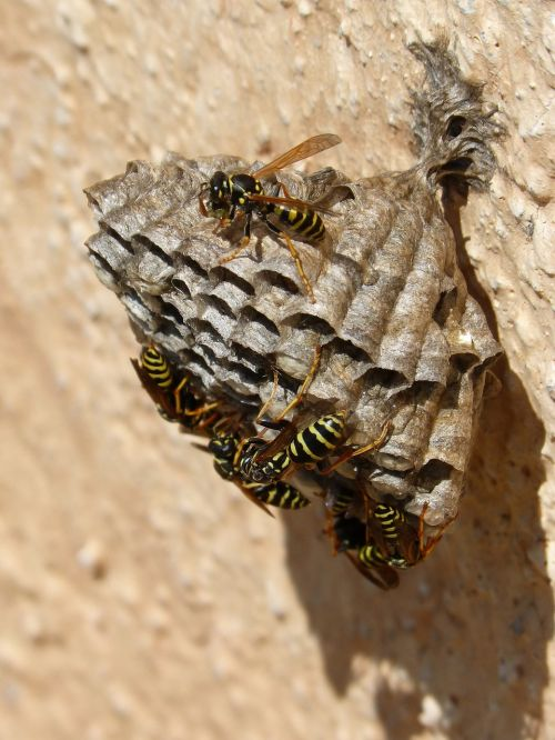 wasps' nest wasps plant architecture