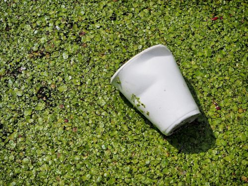 waste pollution cup