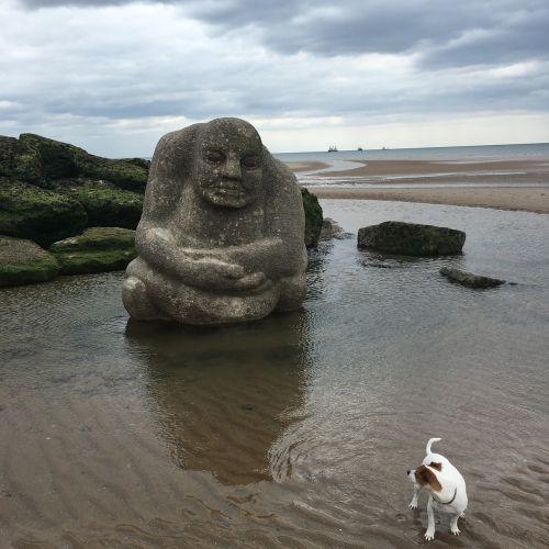 watching dog beach