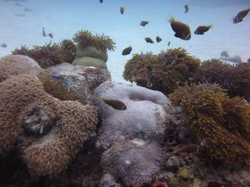 water fish reef