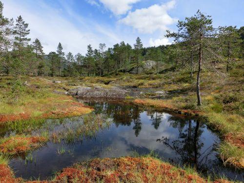 water pond pools