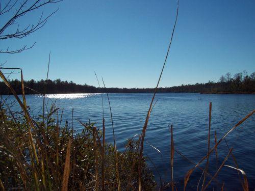 water freshwater reeds freshwater