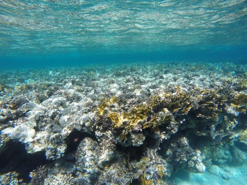 water coral underwater