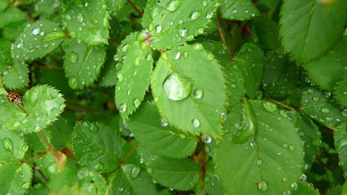 water drops and