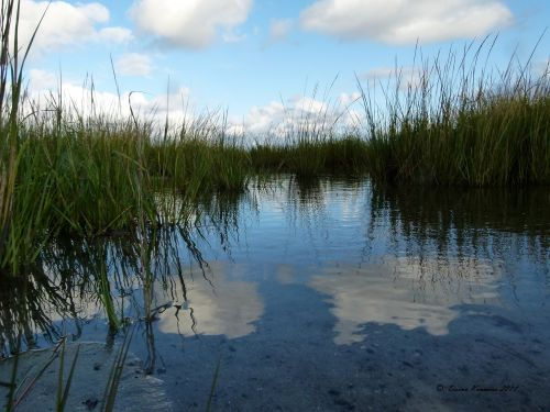 water marsh grass