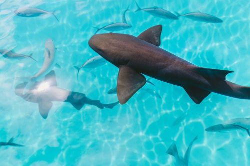 water ocean fish