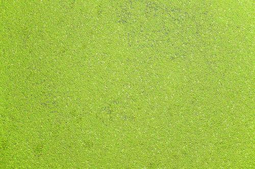water alga canal