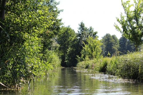 water spreewald landscape