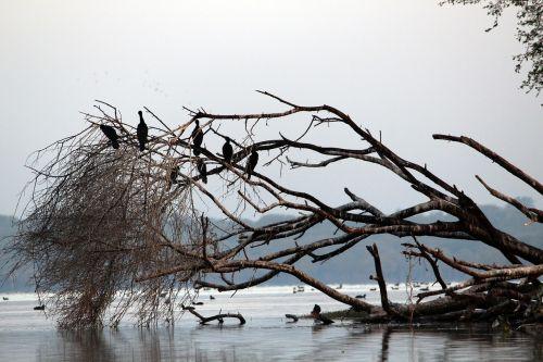 water bird tree