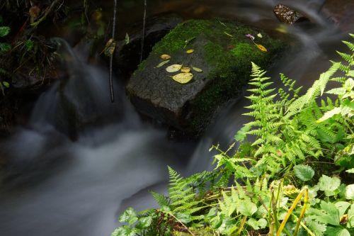 water fern grass