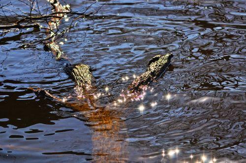 water sun glitter glitter