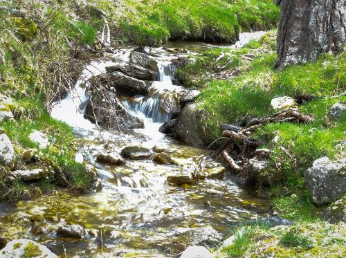 water forest movement