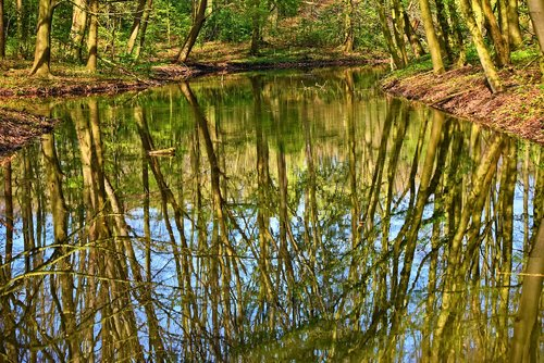 water  pond  reflections