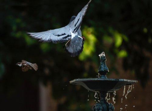 vandens, Dalintis, gamta