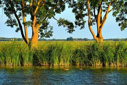 water  river  shore