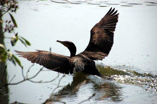 water  alk  bird