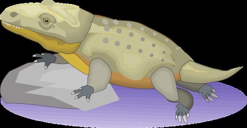 water rock reptile