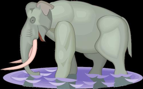 water elephant walking