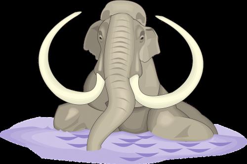 water elephant animal