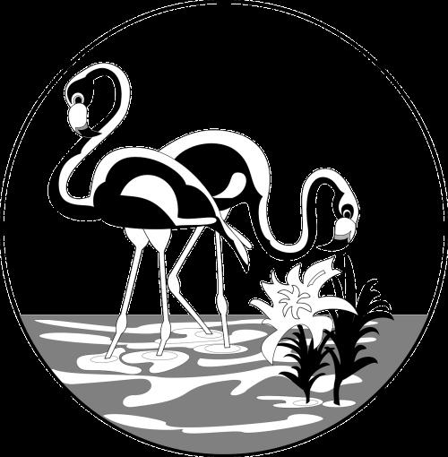 water flamingos long