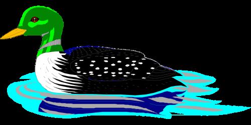 water bird swimming