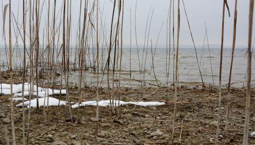 water bank reed