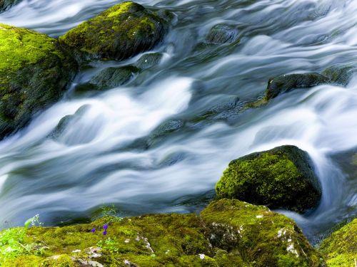 water moss river