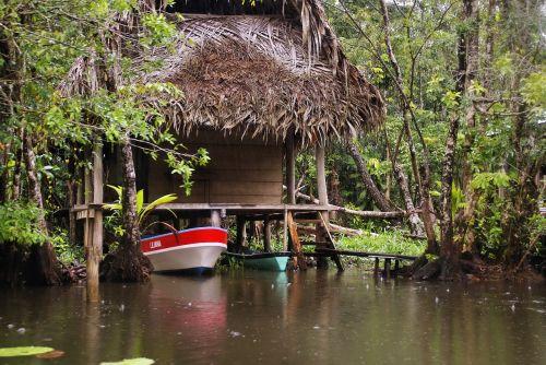 water tropic tropical