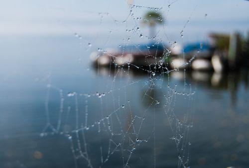cobweb dewdrop water