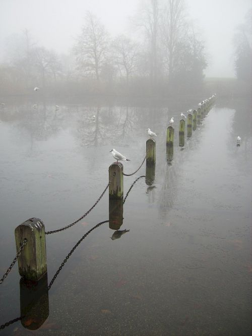 water birds perched fog
