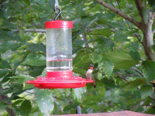 water dispenser hummingbird bird