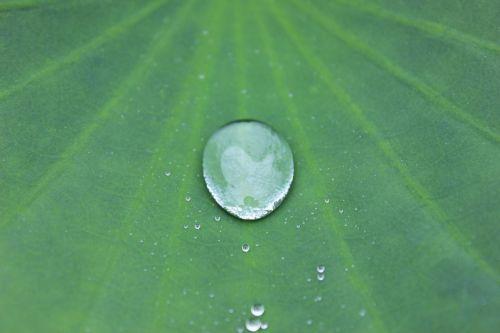 water drop sheet water-repellent