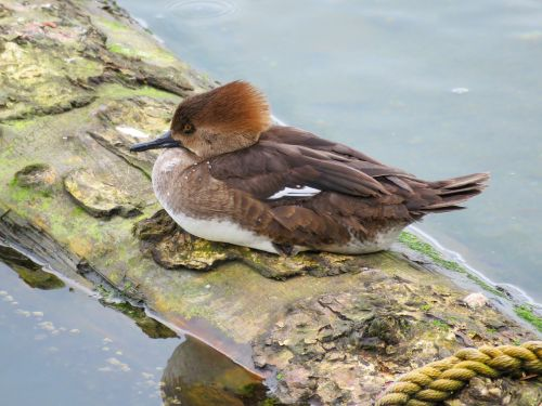 water fowl bird birding