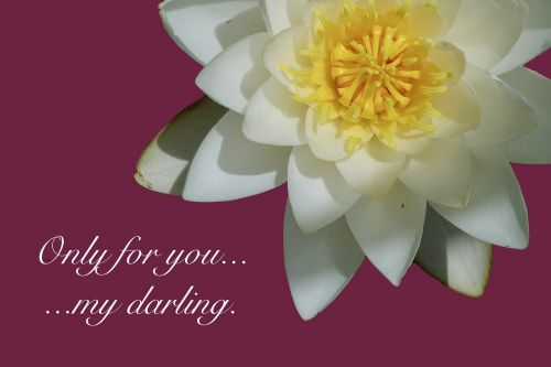 water lily poetry declaration of love