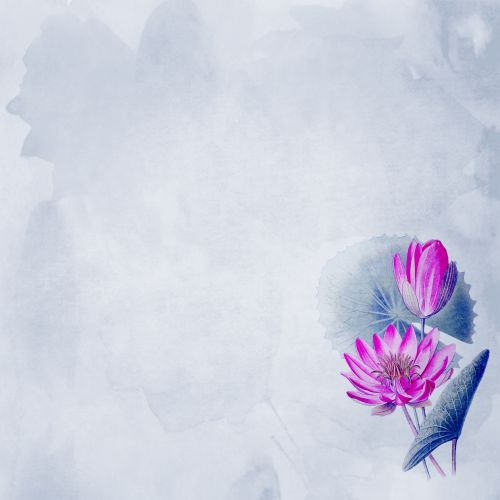 Water Lily Flowers Wallpaper