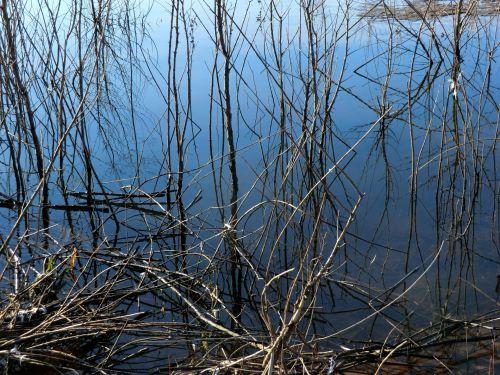 Water Meets Weeds 112