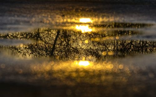 water puddle mirroring reflection