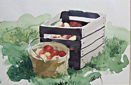 watercolor  painting  apples