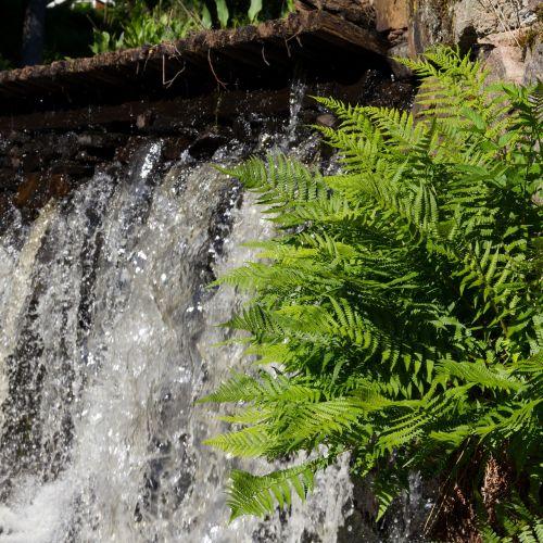 waterfall greenery closeup