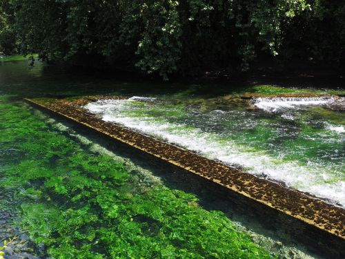 waterfall water aquatic plants