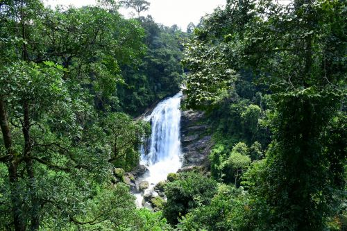 waterfall india forest