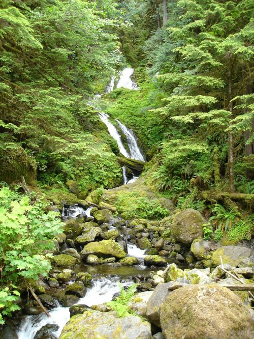 waterfall lake quinault nature